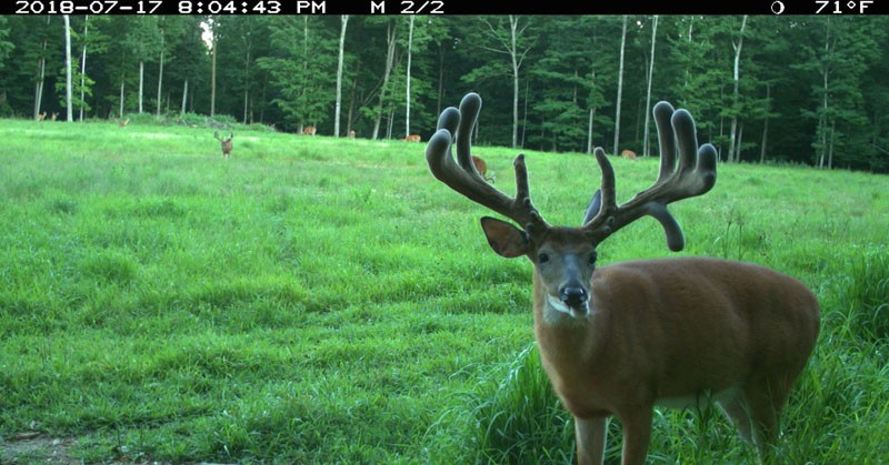 Trail cam shot at Wilderness Whitietails