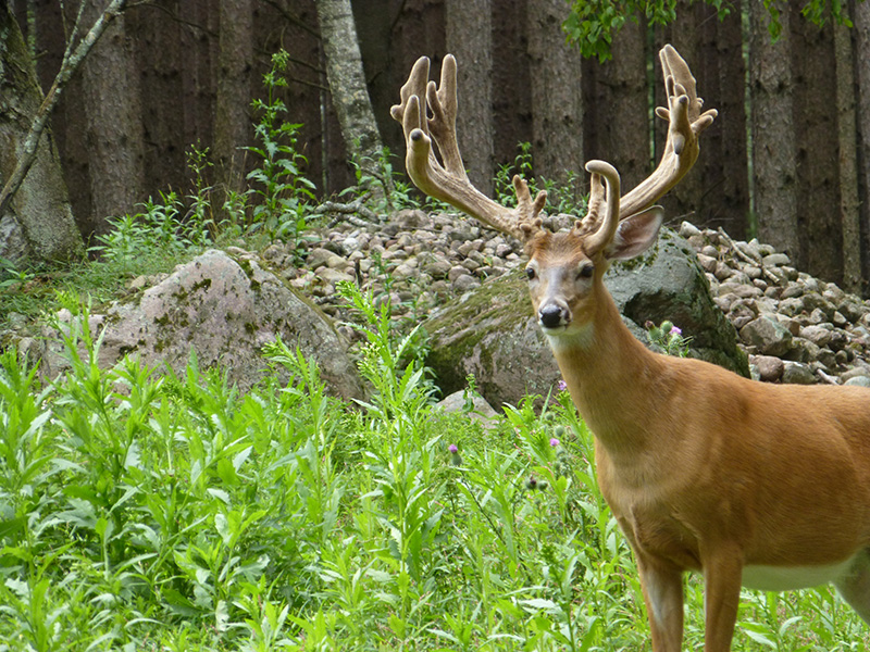 Giant Sightings! What's happening at Wilderness Whitetails this month.