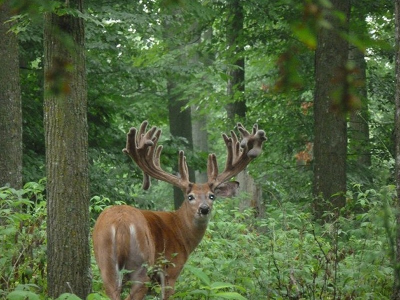 wilderness-whitetails-hunting3